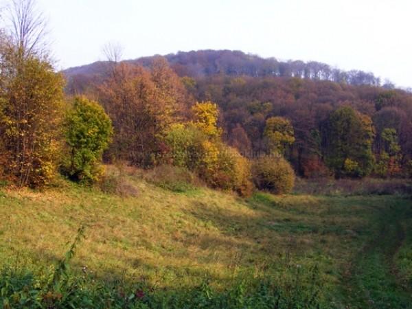 Az ősz színei